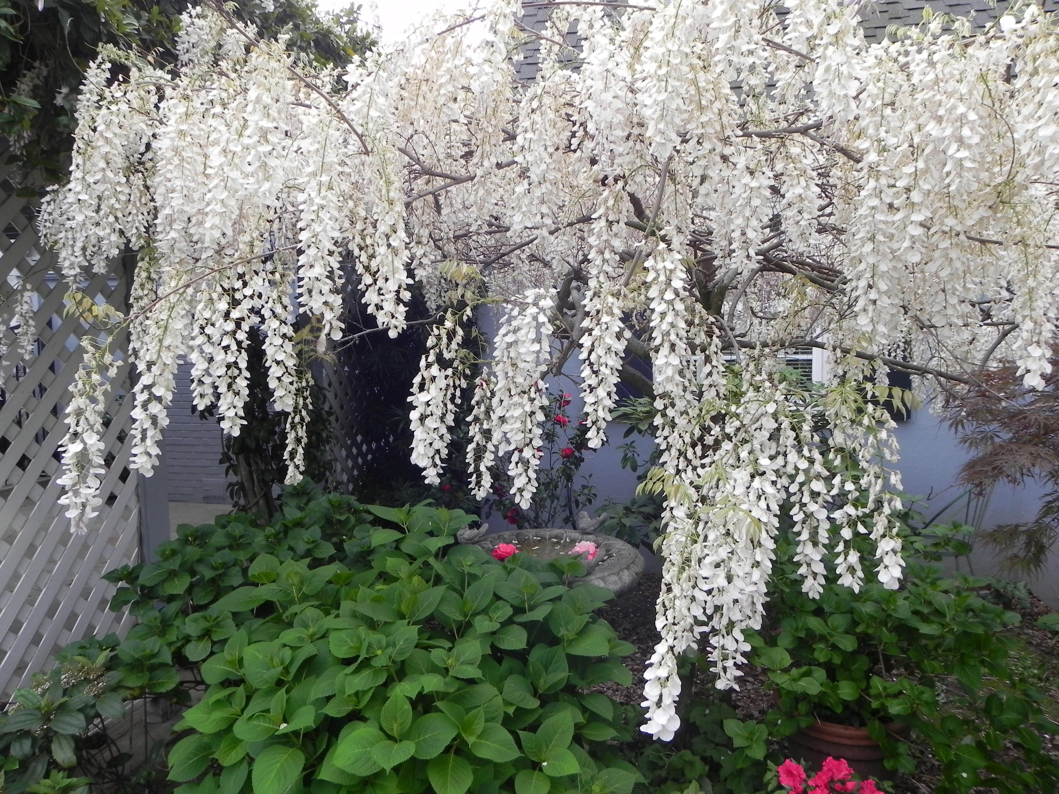 Fine cascading white flowers ensign wedding and flowers ispiration enchanting cascading white flowers inspiration wedding and flowers mightylinksfo