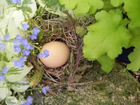 Nothing as sweet as a newly laid egg as a symbol of spring & new life
