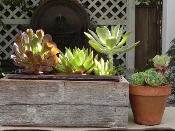 cactus-in-barnwood-boxes