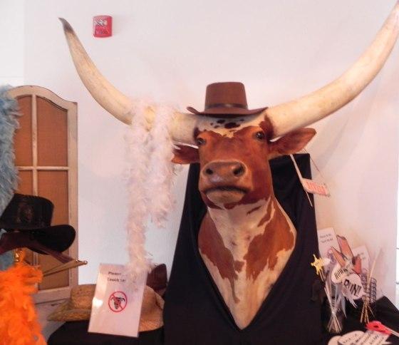 long-horn-bull