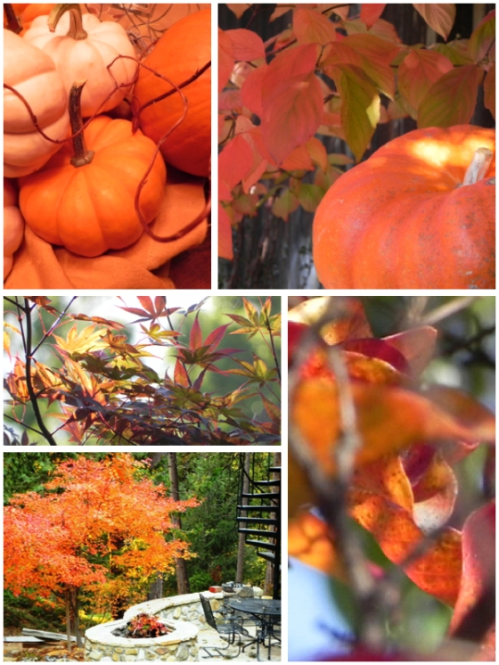 fall collage pumpkins & japanese maples