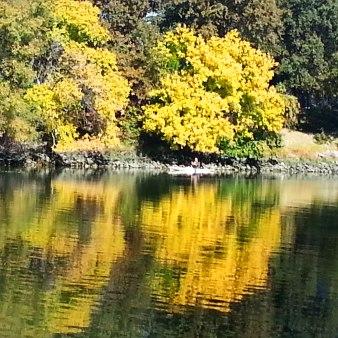 golden-leaves-reflected-on-river