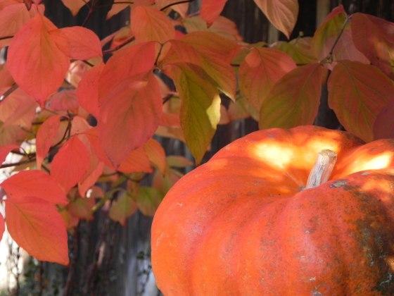 pumpkin-and-fall-leaves-1